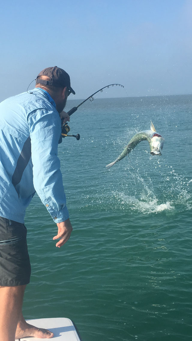 Keys Flats Fishing Tarpon Jumping